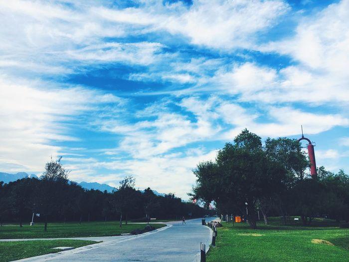 Tree Sky Day