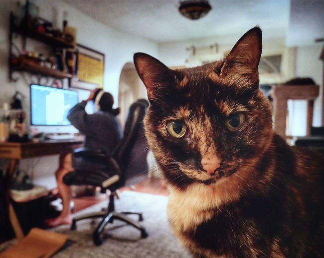 Portrait of cat sitting on camera