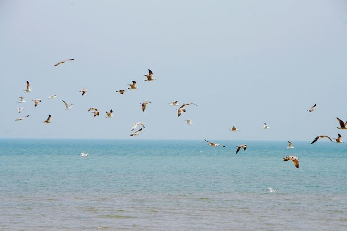 Flamingo Bird Flying Water Sea Colony Beach Flock Of Birds Blue Sky Horizon Over Water Shore Seascape Animal Migration Group Of Animals Ocean The Great Outdoors - 2018 EyeEm Awards