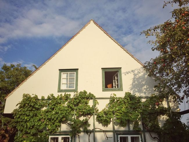 Agriculture Architecture Building Climbing Europe Exterior Façade Farm Farmhouse Fruits Germany Holiday Home House Outdoors Renovation Residential Building Roof Traditional Tree Vine Vineyard Window Wine Winery