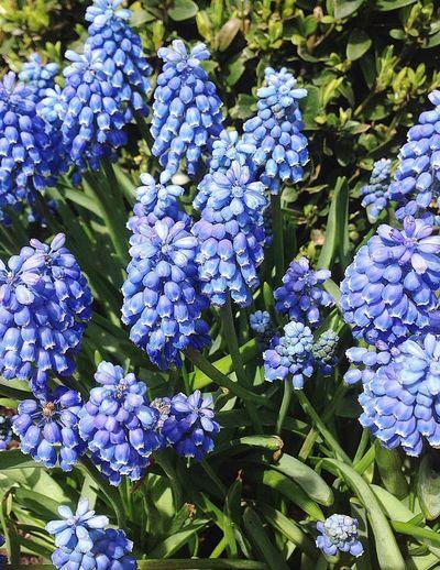 Flowers Garden Spring Petite Blue