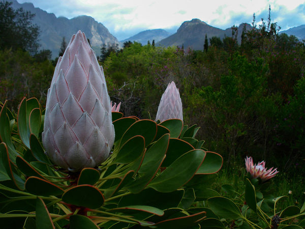 Beautiful Scenery Beauty In Nature Close-up Day EyEmNewHere Fairest Cape Flower Flower Head Fragility Freshness Green Color Growth Leaf Love Nature Photography Love Nature🌲 Magnificent Scenery Mountain Nature No People Outdoors Plant Scenics Sky