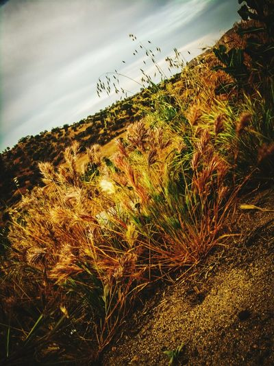 EyeEmNewHere EyeEm Selects RAWphotography EyEmNewHere Photography Photoedits Naturephotography Greenery Wildlife Amateur Novice Conservation Visalia California Summer Mitsubishi Spring Plants Foothills Mountains Gettyimages Nature Fotografia Art Agriculture Rural Scene Rice Paddy Sky Grass Landscape Adventures In The City Visual Creativity