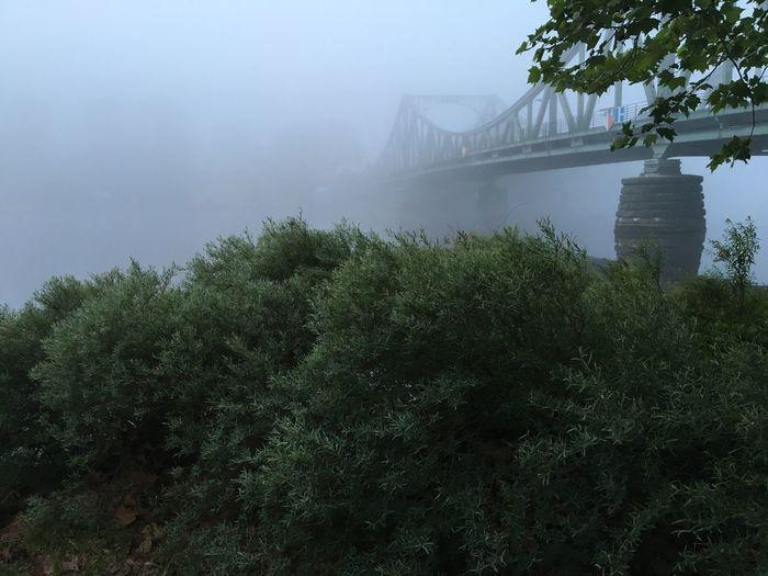 Fog Bridge -