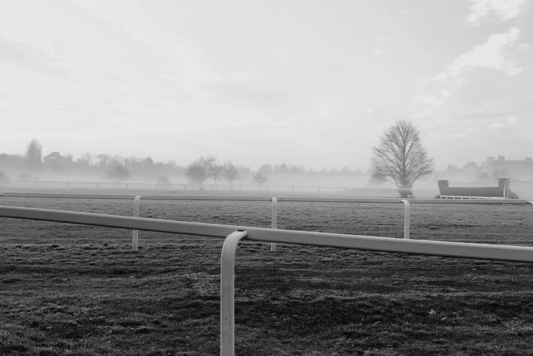 Sandown Race Course, 8am on a cold January day Tree Agriculture Nature Tranquility No People Day Sky Beauty In Nature Landscape Outdoors horse race