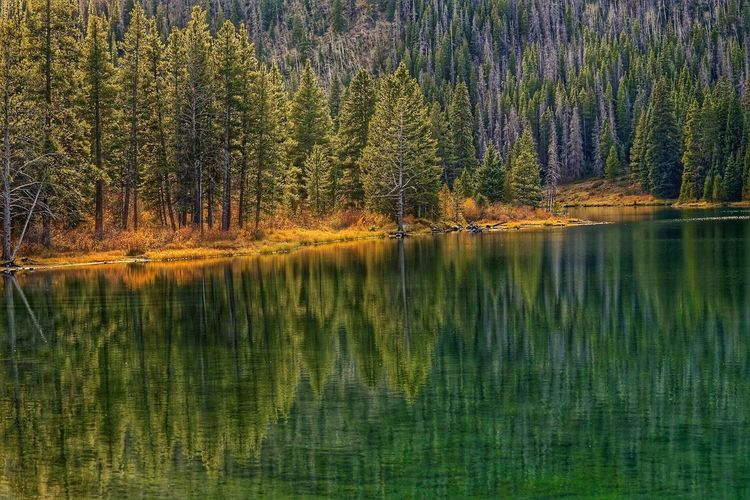 Tree Nature Forest Water Light And Reflection Reflection Landscape Landscape_Collection Outdoors Pine Tree Lake Green Color Mirror Colorado End Of Summer Tranquil Scene No People Nature Week On Eyeem Travel Roadtrip Beauty In Nature Wilderness Tranquility Growth The Great Outdoors - 2018 EyeEm Awards The Traveler - 2018 EyeEm Awards