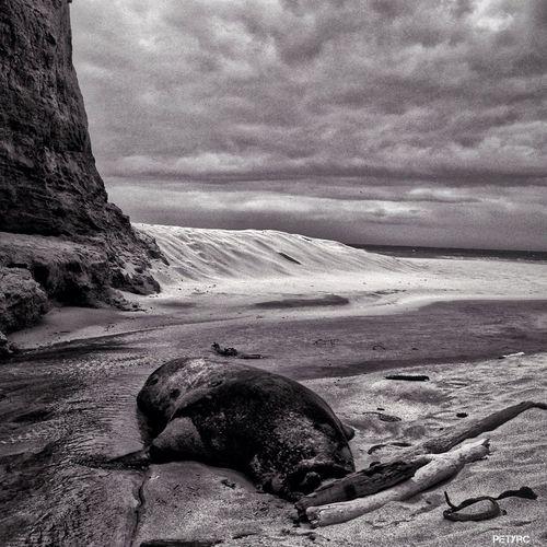 Beach Blackandwhite NEM Black&white Imperfect Postcards
