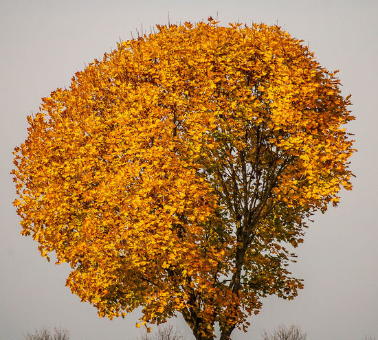 Herbstfärbung - autumn colors Stimmungsbild Hofi Tree Multi Colored Outdoors Close-up No People Beauty In Nature Herbstfarben Autumn🍁🍁🍁 Herbst Jahreszeiten Best Shots Hofi Schönes Österreich Best Pflanzen & Früchte Hofi Nature Strengberg