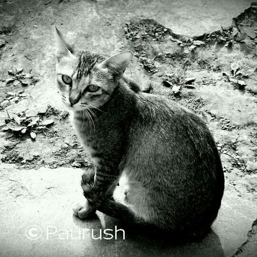Cat Busted! Cold Look Monochrome #dude really !! don't you have anything better to do ? :D
