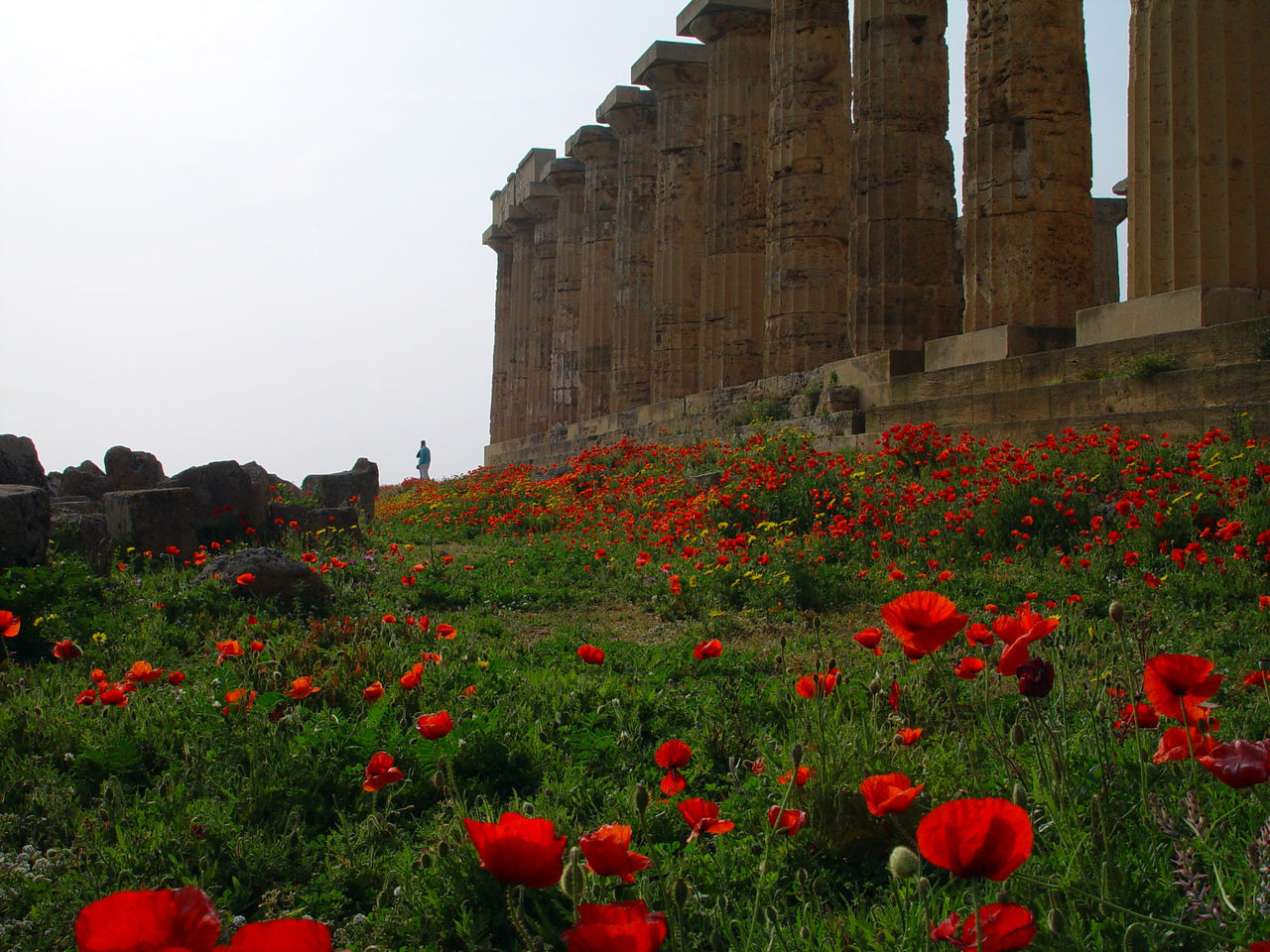 flower, flowering plant, red, plant, architecture, building exterior, history, the past, built structure, nature, freshness, fragility, growth, sky, poppy, beauty in nature, vulnerability, day, no people, land, outdoors, flower head, ancient civilization, flowerbed
