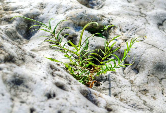 A ferm plant growing on stone. EyeNewHere Nature Ferm Plants 🌱 Stones Stone Plant Nature Growth Beauty In Nature Plant