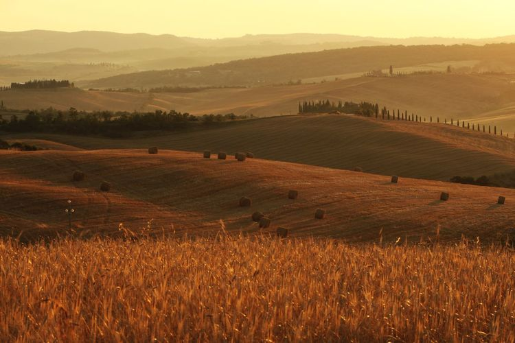 Val d' orcia , Toscany, italy. Italia Hills Colline Senesi Chianti Val D'orcia Val D'0rcia Toscany Relax Tree Beauty Rural Scene Agriculture Dawn Sun Cereal Plant