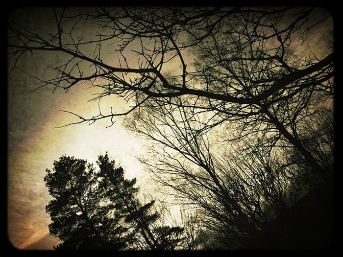Sepia Trees_collection