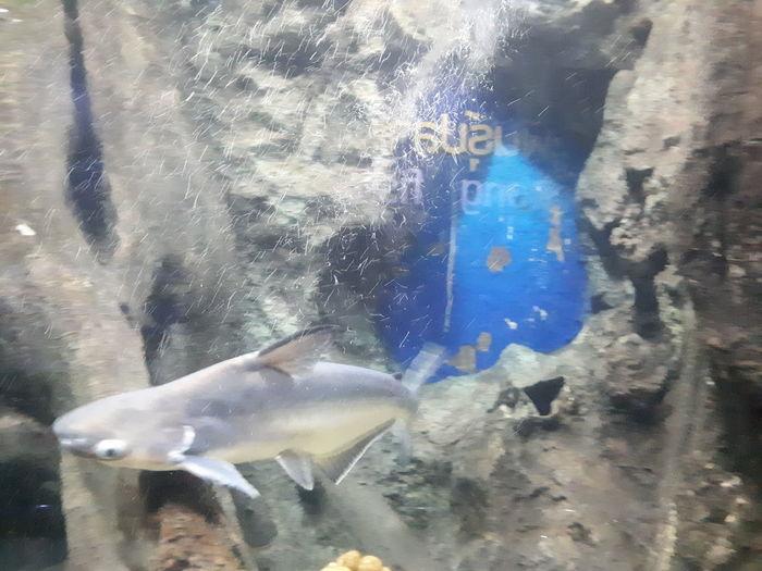 UnderSea Sea Life Water Underwater Swimming Fish Aquarium Close-up Whale Shark Underwater Diving Quintana Roo Cancun Snorkeling Diving Flipper Tropical Fish Shark Stingray Scuba Diving Dolphin Animal Fin Scuba Diver Whale Diving Suit Diving Equipment Humpback Whale Scuba Mask