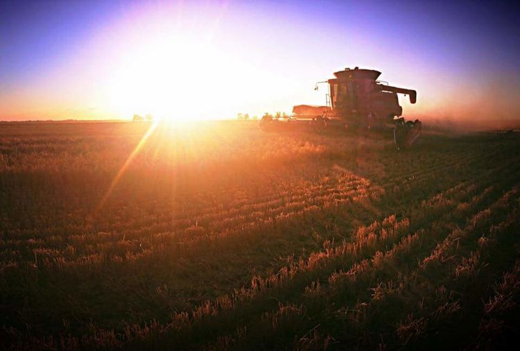 Harvest Urana 2015/2016 Enjoying Life Longdays Sundown Case7010 NSW Australia