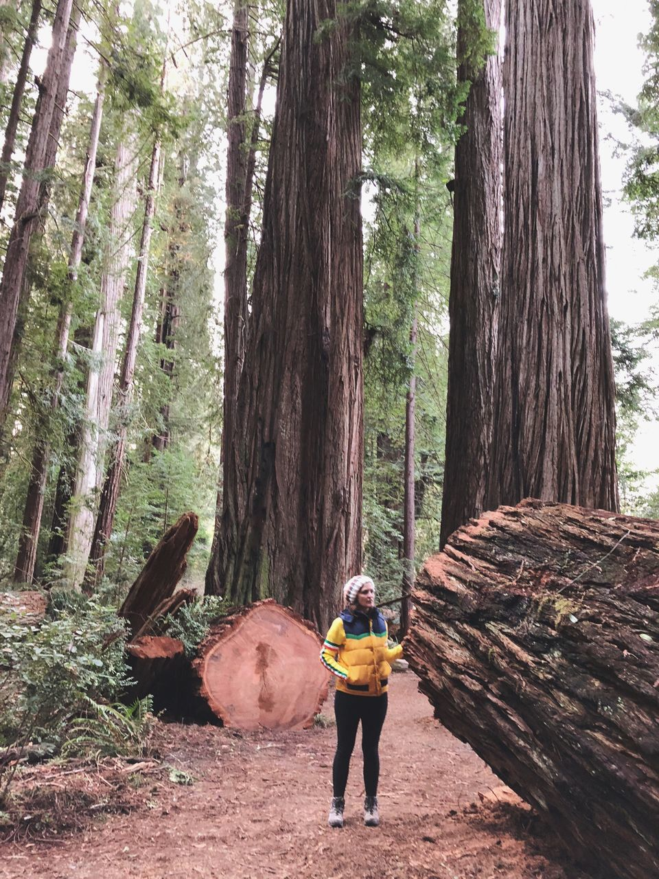 tree, tree trunk, real people, standing, one person, day, lumber industry, leisure activity, casual clothing, nature, forest, lifestyles, full length, outdoors, growth, men, beauty in nature, axe, sky