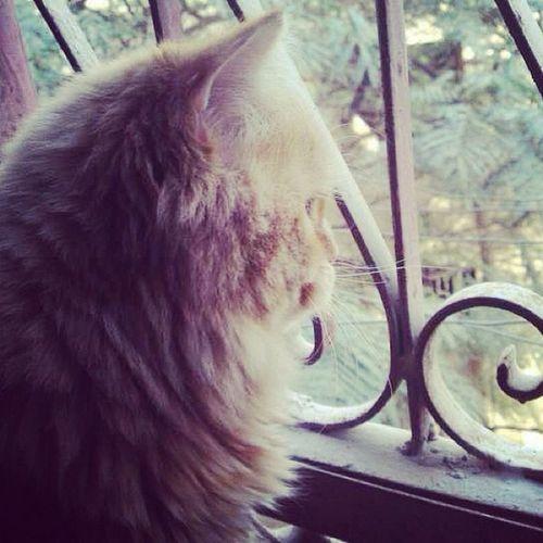 Old Cat Mesho