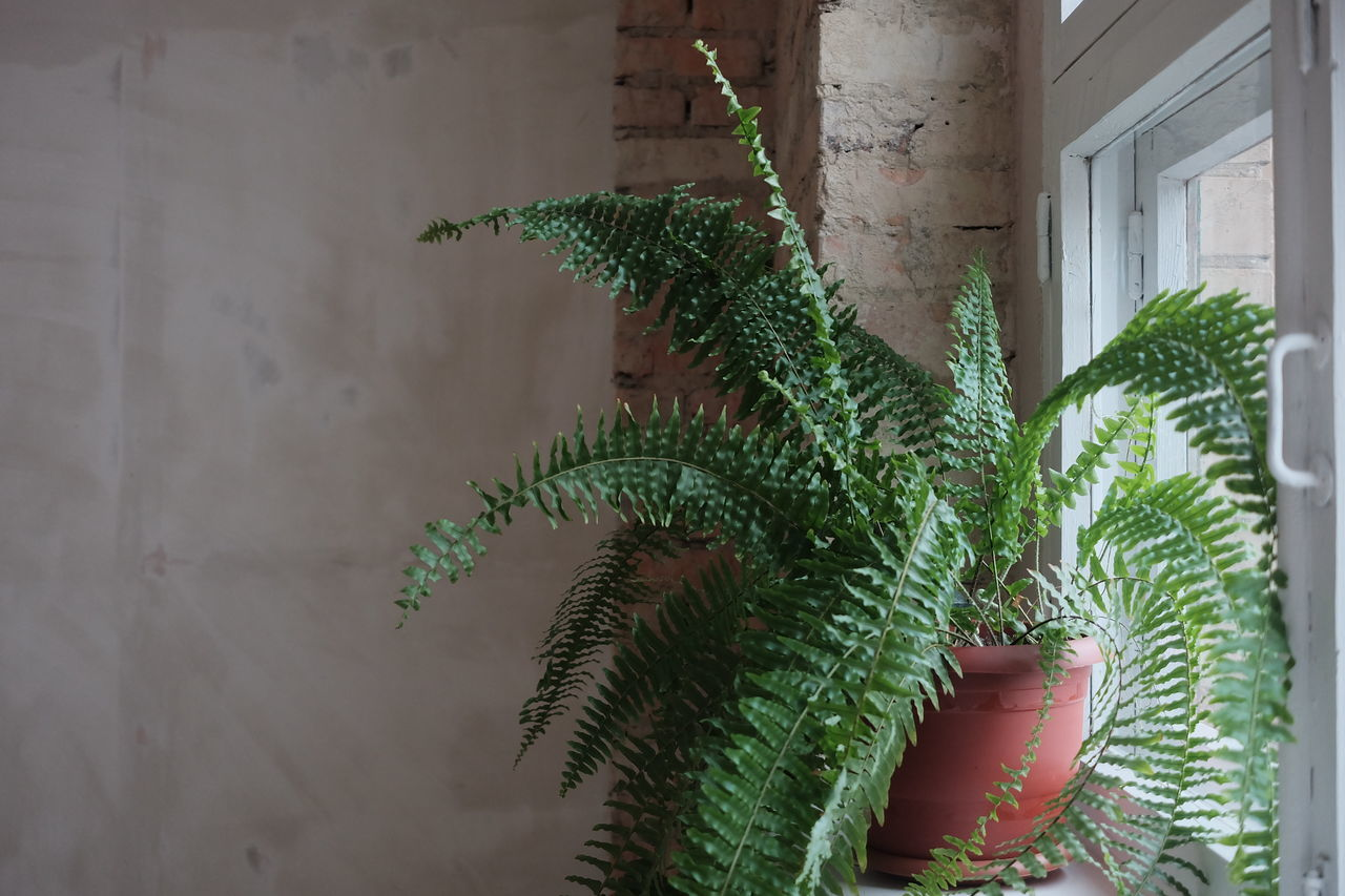 POTTED PLANT BY WINDOW