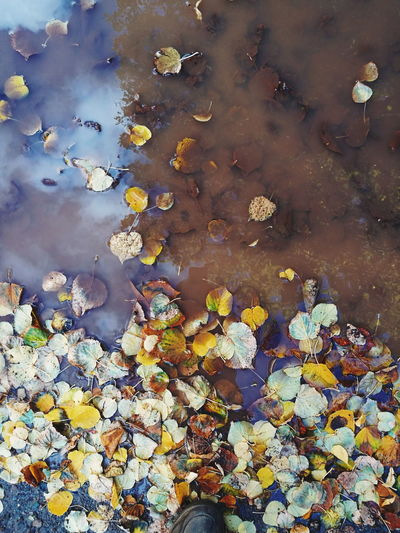 High angle view of water lilies floating in pond