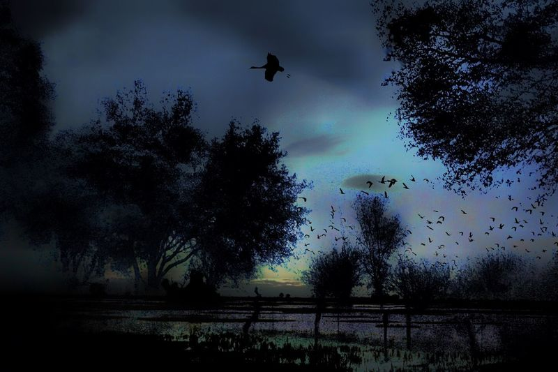 Storm Tree Plant Sky Silhouette Nature Flying Bird Animal Cloud - Sky Mid-air No People Animals In The Wild Growth Animal Themes Vertebrate Dusk Tranquility Group Of Animals Tranquil Scene Animal Wildlife