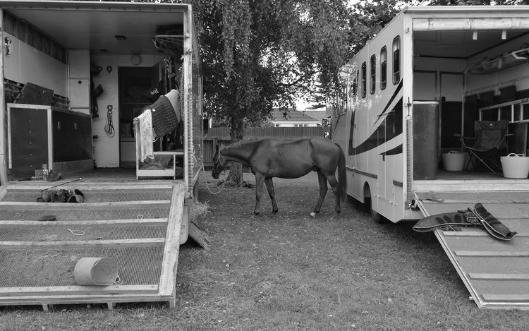 home away from home. 👍🐝🙋🙏 Horse Horse Trailer Show Jumping Horse Photography  Taking Photos EyeEm Best Edits Black And White Blackandwhite Photography Eye4photography  Showcase: February Tadaa Community Kiwi Clicker New Zealand Scenery From My Point Of View EyeEm Masterclass Photography EyeEm Best Shots Animal Photography Equestrian Check This Out Enjoying The Sights Hello World Today's Hot Look Getting Inspired Walking Around