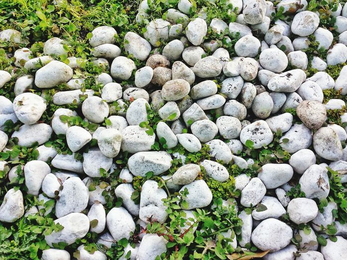 Stone Rocks Pebbles Garden Floral Beauty In Nature Growth Green Color Nature No People Close-up Backgrounds Outdoors Stone Pavement Rocks And Grass Closeup In Nature Closeup Photography No People. Beauty In Nature Diamond Pattern Rossana Morabito