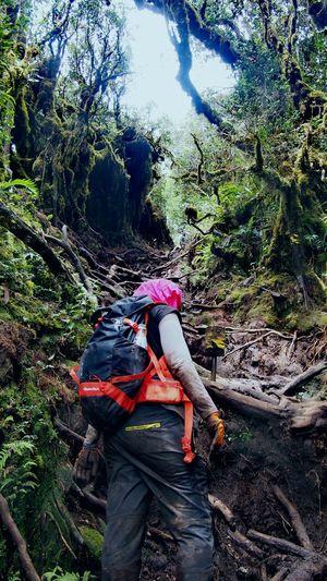 Hikingadventures Hiking Trail Woman Dirt Hope Trying To Climb