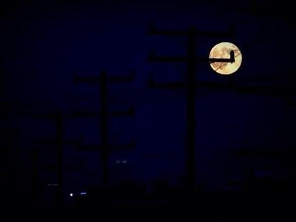 Just in case no one else posted photos of the Supermoon 2014 lol