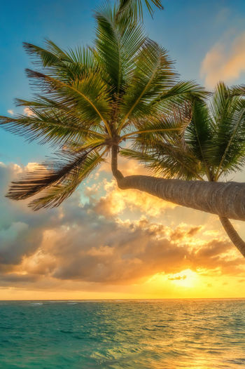 Punta Cana in the Dominican Republic. Sky Sea Scenics - Nature Water Horizon Beauty In Nature Horizon Over Water Cloud - Sky Palm Tree Tranquility Tree Tranquil Scene Sunset Tropical Climate Nature Plant Idyllic No People Beach Outdoors Palm Leaf Coconut Palm Tree