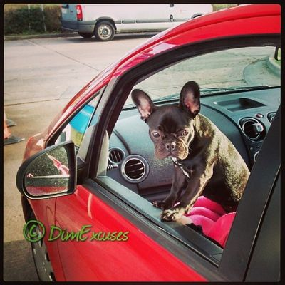 Molly loves riding shotgun in the Colt. AdventuresOfMolly Frenchton