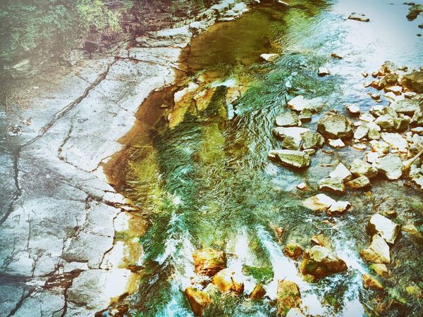 Water Reflection Animal Themes High Angle View One Animal Nature Day Standing Water Dead Plant Tranquility Outdoors Beauty In Nature Green Color Waterfront Scenics Messy No People Dirty