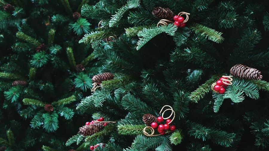 Close-up of christmas tree on plant