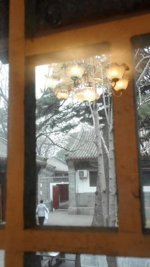 Out of window Relaxing Chinese Style Enjoying Life Tree Window Showcase March