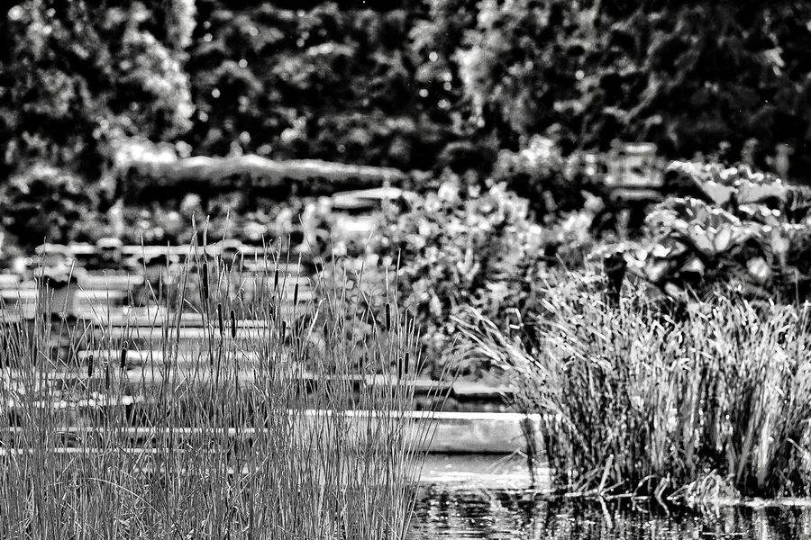 Calmness in BNW Noir Et Blanc Calmness Bnw_collection City Park Planten Un Blomen Full Frame Backgrounds No People Pattern Day Outdoors Nature Close-up Plant Textured  Sunlight Growth Beauty In Nature Tranquility Built Structure Abundance Winter Field Tree Architecture
