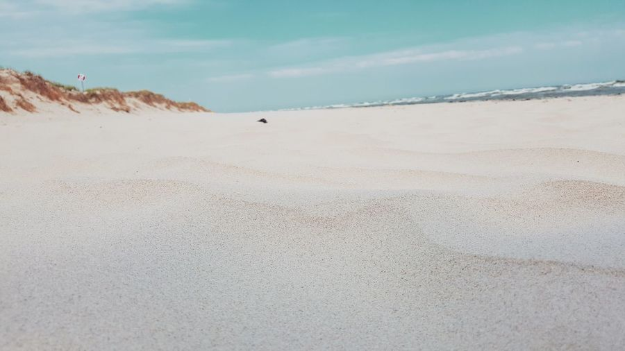 EyeEm Selects Beach Sand Sea Nature Animal Wildlife Scenics Landscape Sweden Nature Nature Bluesky Sweden Animals In The Wild Beauty In Nature Awe Animal Themes Outdoors Sand Dune Travel Destinations Day Swimming Vacations No People Sky