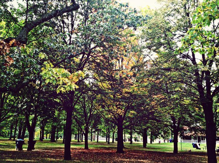 Toronto Walking Around Relaxing Park