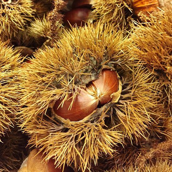 Showcase: November Chestnuts