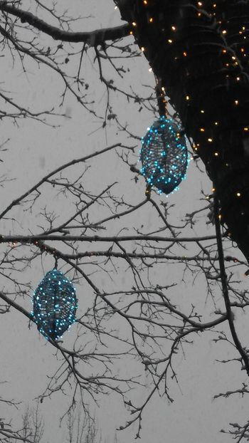 A happy kind of blue ~ Decoration Christmas Celebration Tradition Tree Hanging No People Fragility Christmas Lights Outdoors Close-up Day Christmas Decoration Lovemycity Winter Colors Of Life My Point Of View Walking Around Town Holiday Spirit Tradition Electricity  Beauty In Nature Branch Happy Day Loving The Landscape AI Nowin Portland Maine, USA