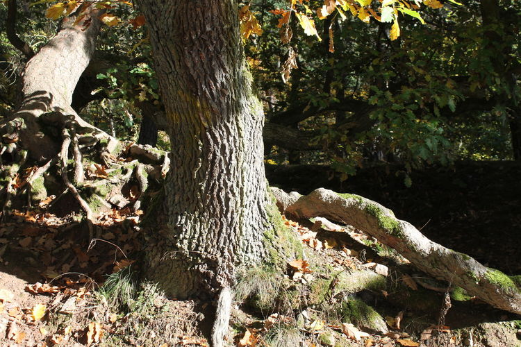 Beauty In Nature Close-up Day Growth Nature No People Outdoors Tree Tree Trunk