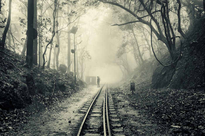 Black And White Foggy Morning Forest Mountain Narrow Guage Railway Railroad Track Vanishing Point Monochrome Photography