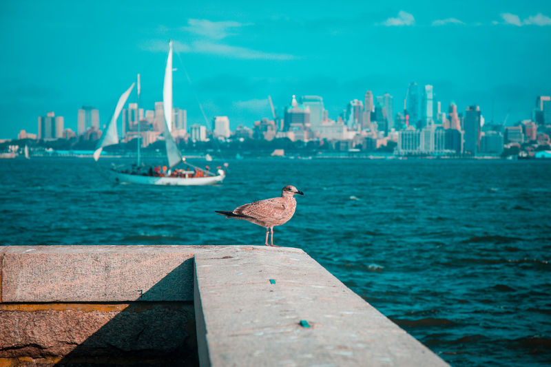 Bird Animal Themes Animals In The Wild Animal Animal Wildlife Vertebrate Water One Animal Perching Sea Nature Architecture Day Built Structure Seagull Building Exterior Nautical Vessel Sky Outdoors Skyscraper City Cityscape Horizon Horizon Over Water