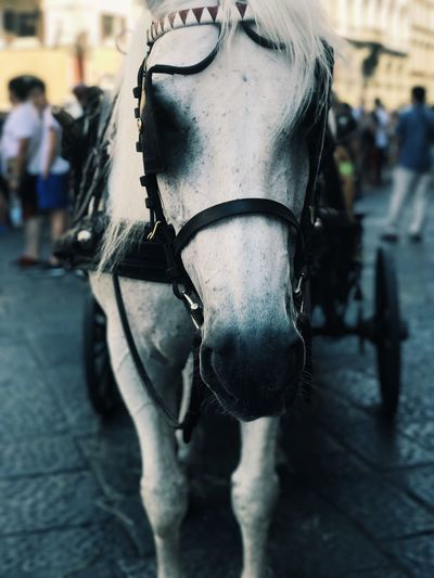 Horse Domestic Animals Animal Themes One Animal Mammal Focus On Foreground Bridle Street Livestock Horse Cart Incidental People Day Horsedrawn Close-up Outdoors