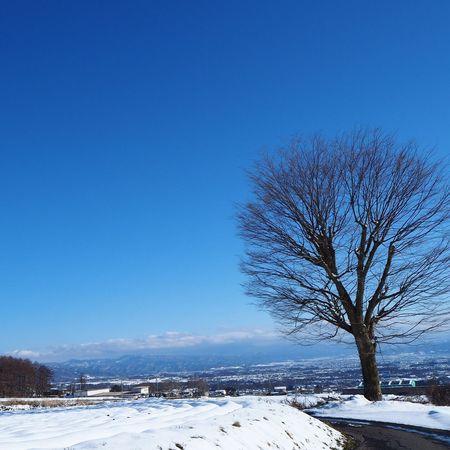 まだまだ雪の心配がね お気に入りの木 青空 いつもの場所 冬の景色 Tree 木 My Sky 空 Nagano, Japan 信州 Nature EyeEm Nature Lover