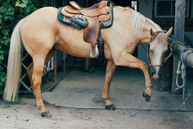 Low section of man riding horse