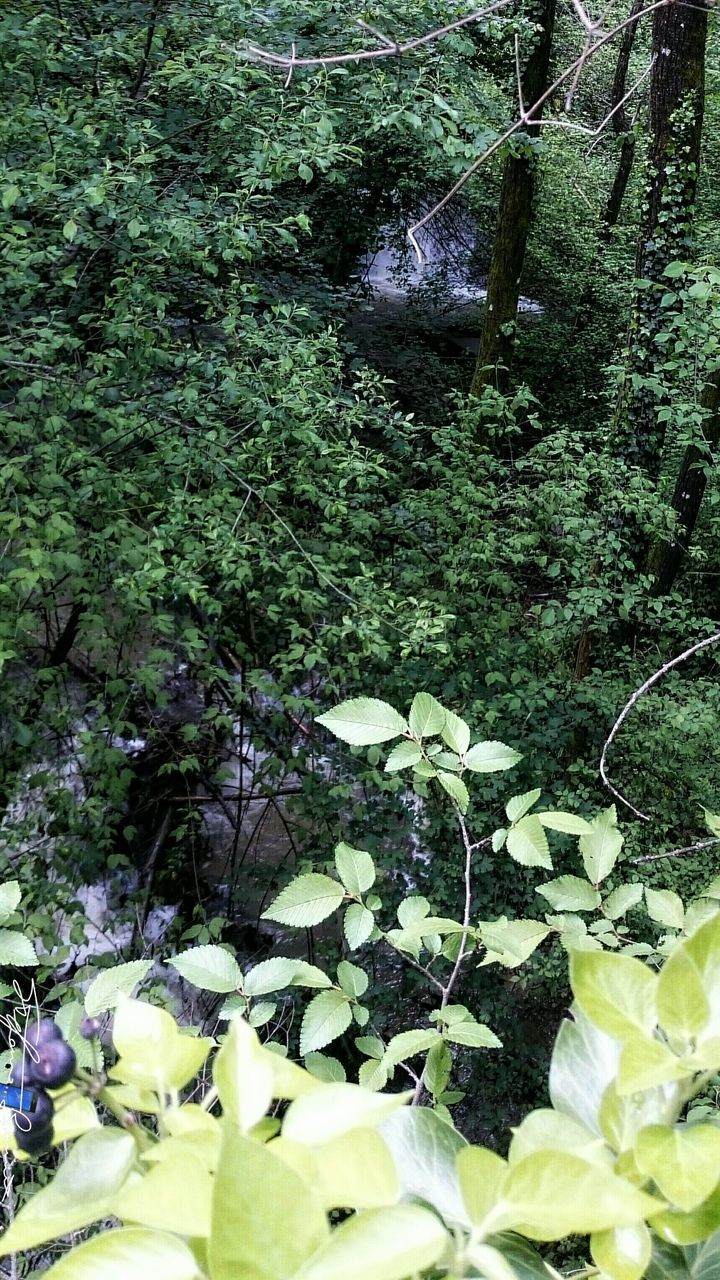 nature, plant, water, growth, beauty in nature, day, high angle view, leaf, outdoors, green color, no people, flower, tranquility, freshness, tree, fragility
