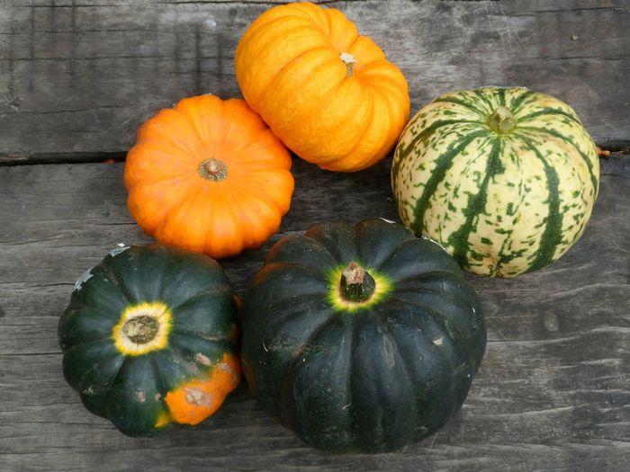 Close-up of pumpkin pumpkins on wood during autumn