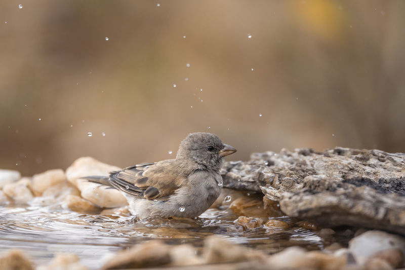 View of birds in water