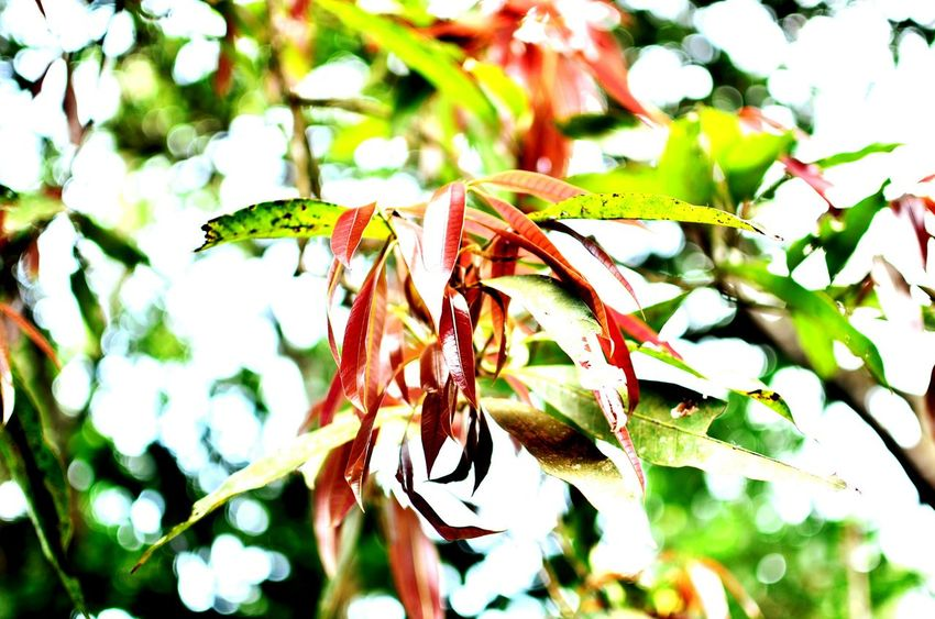 Leaves tree Hanging Out Check This Out Green red