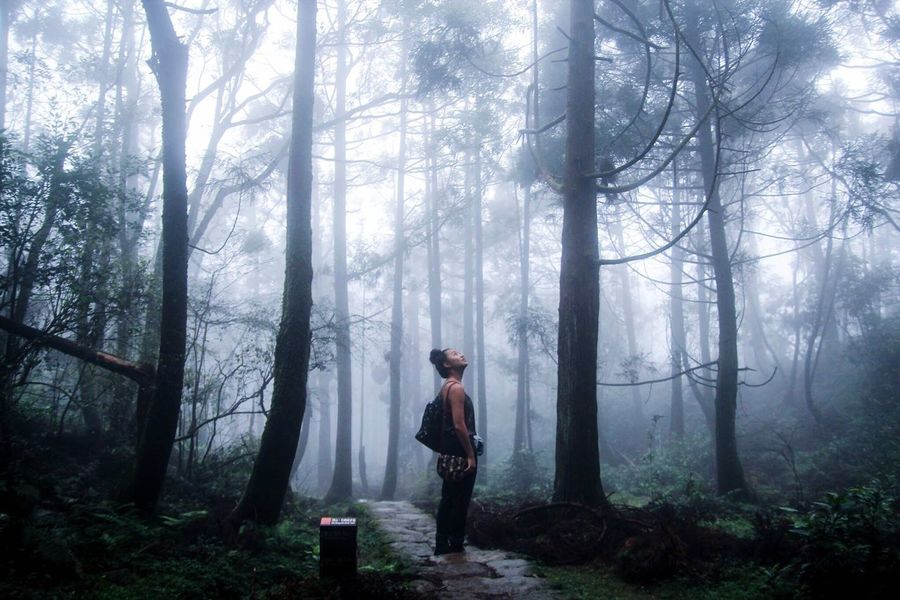 Forest Tree Nature WoodLand Fog Standing One Person Smoke - Physical Structure Adults Only Full Length Adult Tree Trunk Outdoors Day People Only Women Beauty In Nature Real People One Woman Only Scenics I see Taiwan