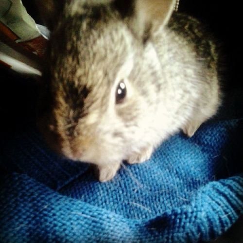 My baby bunny not sure what to name him/her? Isn't she/he cute!?!?